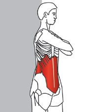 TECHNIQUE  Stand with your feet shoulder-width apart. Place your hands across your chest while keeping your back and shoulders upright. Slowly rotate your shoulders to one side.  See more at: http://www.triggerpointcentral.com/patient/trunk_and_spine_webv_pt_st_page4.php#sthash.S4u7jbsS.dpuf