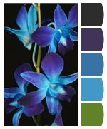 Chip It! by Sherwin-Williams – Home Color Palette for Dendrobium Orchids
