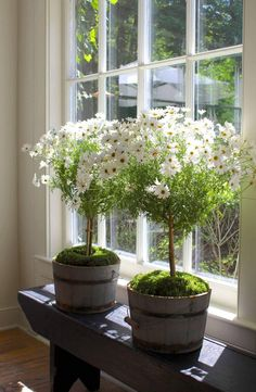 Container gardening is a fun way to add to the visual attraction of your home. You can use the terrific suggestions given here to start improving your garden or begin a new one today. Your garden is certain to bring you great satisfac Indoor Garden, Garden Pots, Indoor Plants, Topiary Garden, Growing Gardens, Small Gardens, Beautiful Gardens, Beautiful Flowers, Plantas Indoor