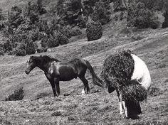 Martin Martinček: Vdova:1964 - 1967 Socialism, World History, Old Photos, Countryside, Folk Art, Nostalgia, Horses, In This Moment, Black And White