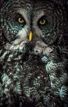 Photograph Don't be a wise ass to a wise owl by Alan Shapiro on 500px