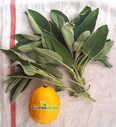 Salvia, Herbalism, Backyard, Tea, Vegetables, Health, Grey Hair, Therapy, Plant