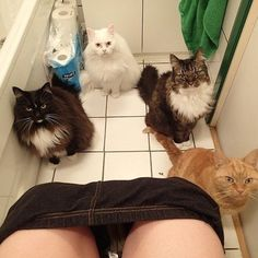 Some guy is having a shit while his cats are watching him