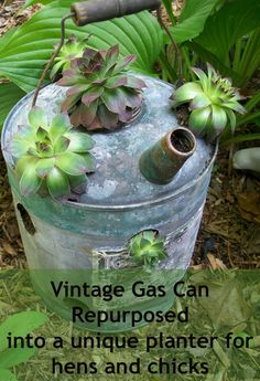 How to use vintage watering cans and gas cans as hens and chicks planters