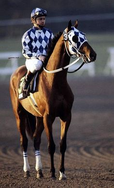"""1988 Horse of the Year """"Alysheba"""" (1984 to 2009) and a young Chris McCarron! Ha!"""