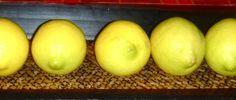 Küchentanz: Salzzitronen