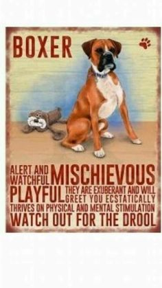 Boxers are little troublemakers!