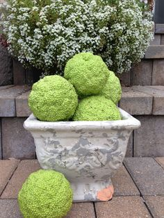 Hedge apples are here! Fun to decorate with in fall arrangements.