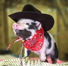 I'm a Cowboy, Baby
