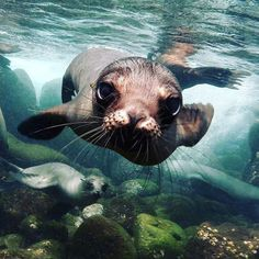 "11.7k Likes, 61 Comments - Discovery (@discoverychannel) on Instagram: ""Photo of the Day: A close-up shot of a sea lion off the Galapagos Islands. . . #naturephotography…"""