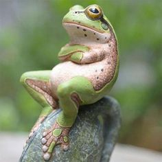 What you waiting for? #ZenQ, #frog!!! http://zenq.co