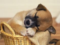 Funny Dogs | cute-and-funny-sleeping-dog-wallpaper, Cute Wallpaper | Cute and Funny ...