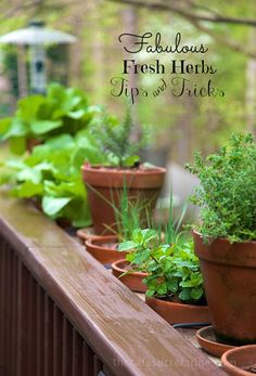 Lots of tips for growing and using fresh herbs. Fresh Herbs Tips & Tricks