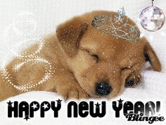 HAPPY NEW YEAR with a puppy - Google Search