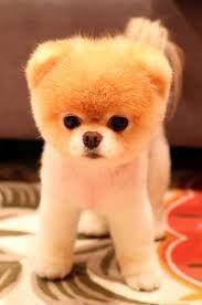 el perro mas bonito del mundo - Buscar con Google