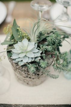 Really like the succulents as a wedding centerpiece with the rustic concrete planter.