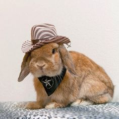 Pin for Later: This Adorable Bunny Dresses Better Than You Could Ever Hope To Even bunnies can be cowboys.