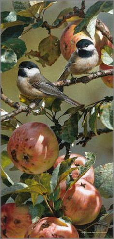 Carl Brenders - Chickadees and Apple Tree. Beautiful work, it looks so real!
