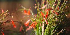 Dandelion, Garden, Flowers, Plants, Balcony, Lawn And Garden, Garten, Dandelions, Gardens