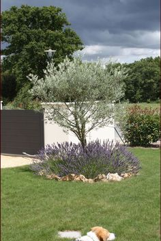 Parterre avec cailloux massif contemporain taupi re for Decoration jardin olivier
