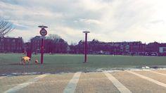 #amsterdam #dog #grass #peace #sun #sunnyday #march #relax #cute