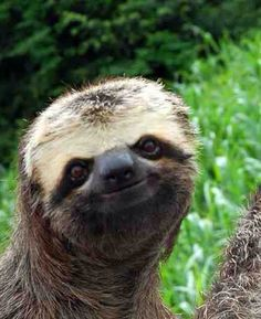 Look at his sweet little sloth face!!!