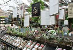 Oh how I want a garden shop..