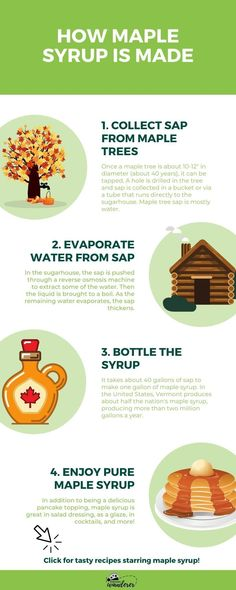 "Once a maple tree is about 10-12"" in diameter, it can be tapped for sap. A hole is drilled in the tree and the sap is collected. Next, water is evaporated from the sap. As the liquid is brought to a boil, the sap thickens. Lastly, the maple syrup is bottled. It takes about 40 gallons of sap to make one gallon of maple syrup. In the US, Vermont produces the most maple syrup. But maple syrup is also made in Maine, New York, Pennsylvania, New Hampshire, Michigan, and Wisconsin. Maple Syrup Glaze, Best Maple Syrup, Maple Syrup Recipes, Organic Maple Syrup, Pure Maple Syrup, Maple Syrup Benefits, Chicken And Biscuits, Salad In A Jar"