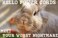 Hello power cords, meet your worst nightmare. Head on over to Rabbitholehay.com to learn more about what rabbits chew on!