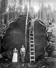 "Pinner wrote: ""Family photo. Yes that's a TREE that they cut down BY HAND!!!! well saw but look at the saw!!! the guy on the ladder is holding the saw!  Oh the good old days of real work and SOMETHING TO BE PROUD OF!"" Giant sequoia log, Sequoia National Park, California, c1910"