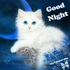 of Kittens & Cute Animals Cute Kittens, Cats And Kittens, Cute Cats Photos, Cute Pictures, Cool Cats, Good Night Cat, Kitten Images, White Cats, Cat Drawing