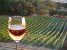 Paradise Ridge Vineyard, CA