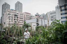 granja orgánica en una azotea de edificio en Hong Kong