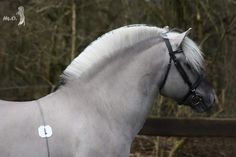 Fjord Horse, All About Horses, Horse Riding, Equestrian, Board, Horses, Horse, Pet Dogs, Horseback Riding
