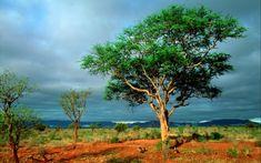 krugerov národný park - Hľadať Googlom