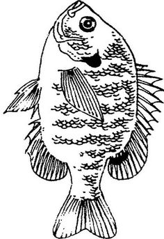 Http Dailycoloringpages Com Images Texas Bluegill Fish