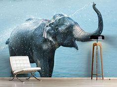 Raumansicht Wohnzimmer Fototapete Der junge Elefant