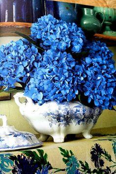 fiori blu