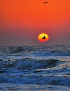✮ A gorgeous sunrise over the ocean with two seagulls silhouetted