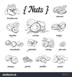 Vector set of hand sketched nuts on white background in vintage style: hazelnut, almonds, peanuts, walnut, cashew, brazilian nut, chestnut, macadamia, pistachios, pine nuts, coconut
