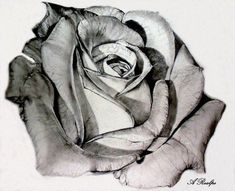 I think I've found the style for my rose tattoo, and this is it! this is stunning #rosetattoosonneck