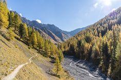 Gold leuchtende Lärchen und röhrende Hirsche: im Oktober bietet das Val Trupchun eine der prächtigsten Kulissen für eine schöne Herbstwanderung im Engadin. Chur, Switzerland, Places To Go, Country Roads, Outdoor, Water, Travel, Gold, Vacations