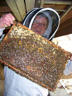 našapr Warre: Sezóna prírodného včelárenia v konvenčných úľoch Fish, Pisces
