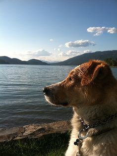 """""""...My picture depicts a late summer evening spent swimming with my dog Leo in a lake in Whitefish, MT near Glacier National Park. Having Leo around forces me to slow down and enjoy the beauty in all the small things - here it is the feel of the sun on my face as the air starts to get cooler, the smell of the grass, the soft sand underfoot, the tired happy feeling in my body after a swim, and taking the time to do something relaxing just for myself. Beauty is all around us!"""" ~ Liz Talago"""