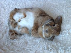 Roly poly bunny rolls around - August 3, 2014
