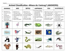 ANIMAL CLASSIFICATION CUT & PASTE: SORT ANIMALS BY CHARACTERISTICS - TeachersPayTeachers.com