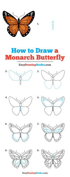 Cartoon Butterfly, Butterfly Kids, Butterfly Life Cycle, Monarch Butterfly, Drawing Tutorials For Kids, Easy Drawings For Kids, Drawing For Kids, Drawing Ideas, Animal Drawings