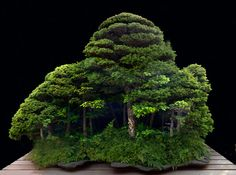 Saikei: a whole little forest! Een mooi gesloten bos, met onbenoemde onderbegroeiïng (varens...)