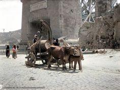 Horses, World, Photography, Animals, Beautiful, Vintage, Old Photographs, Old Pictures, Color Photography