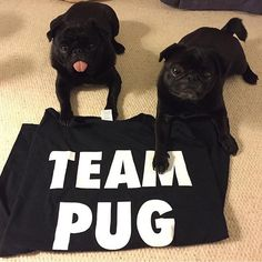 It will always be #teampug!  Photo by @charly_lola_pugs  Want to be featured on our Instagram? Tag your photos with #thepugdiary for your chance to be featured.